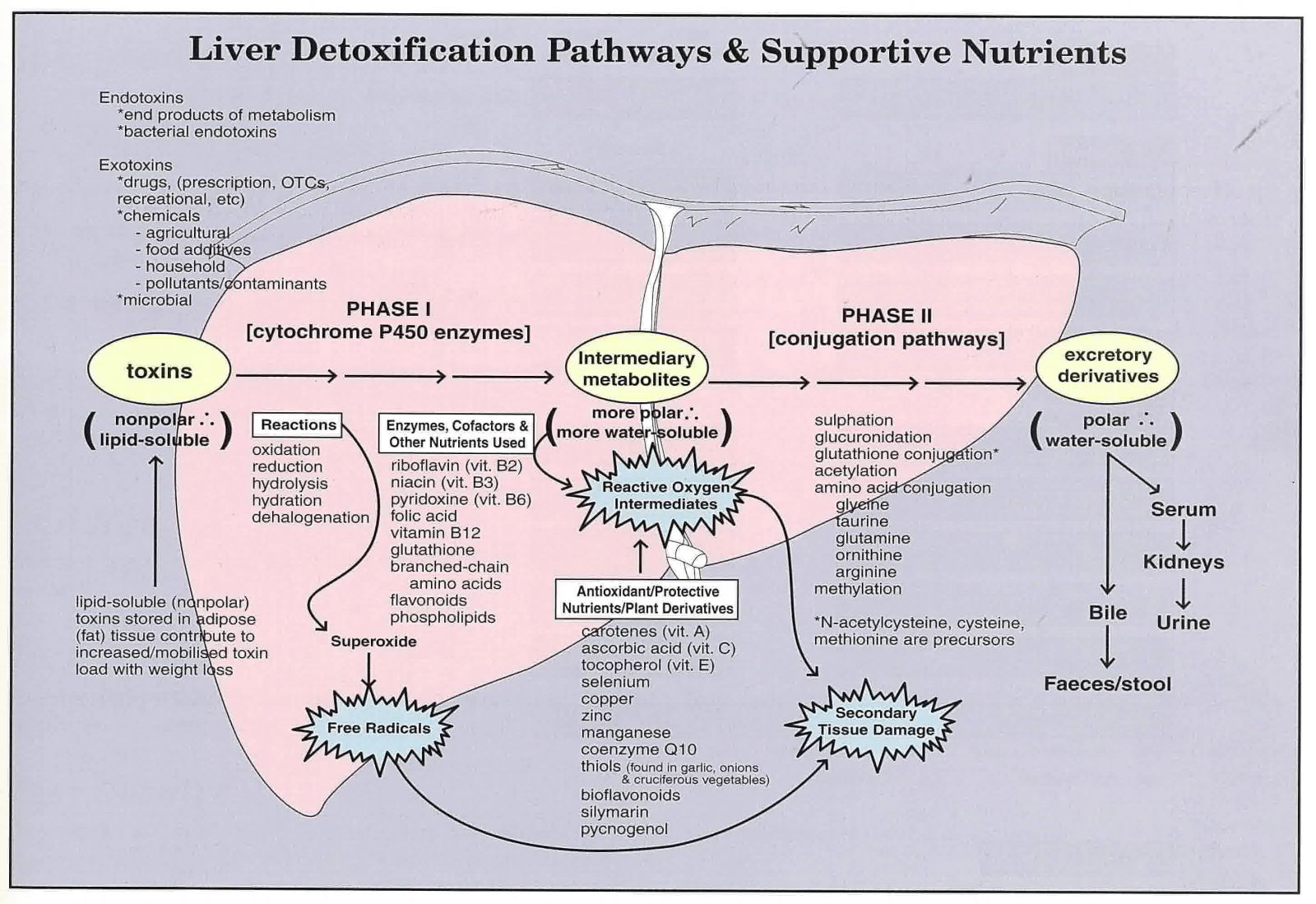 Nanay S Diagnosis Functional Liver Detoxification Profile